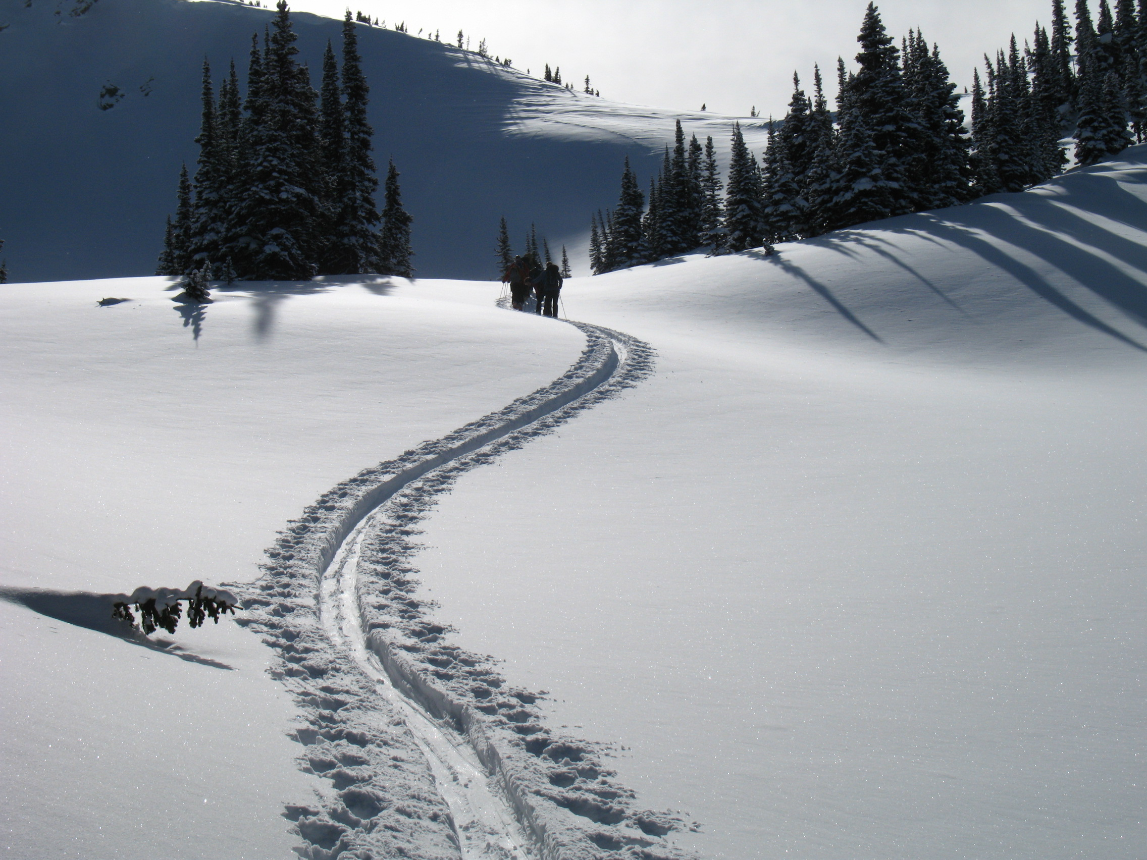 A long and winding up-track on Rangifer Ridge.