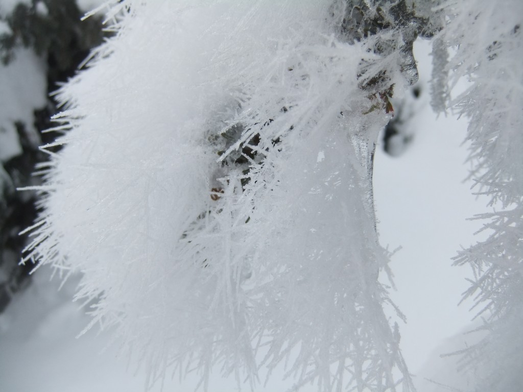 Hoar frost clinging to icicles hanging from tree branches - proof of a melt and then a hard freeze (I am guessing).