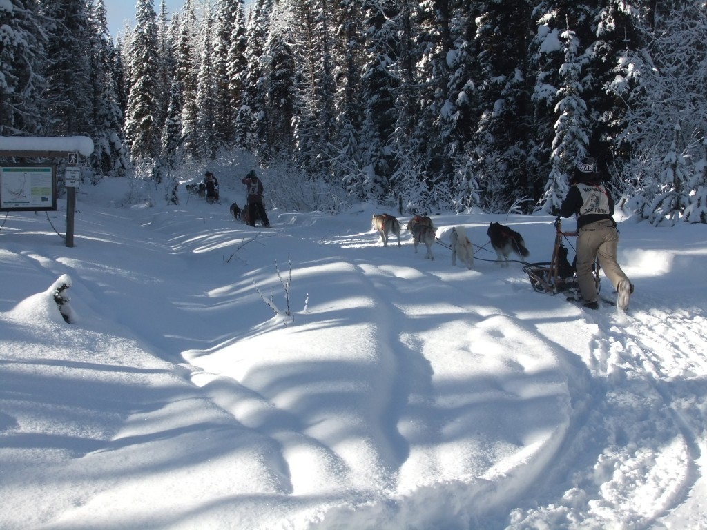 More mushers in the Sled-dog Mail Run.