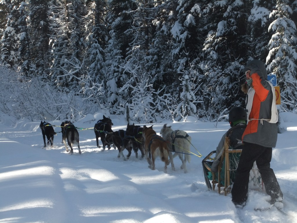 The Sled-dog Mail Run